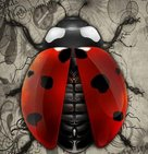 Ladybirds Photography