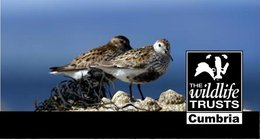 Great places to see Winter Waders and Wildfowl in Cumbria